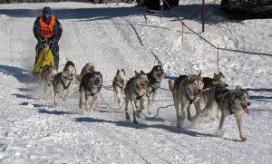 1200px-Frauenwald,_Hundeschlittenrennen,_6